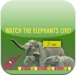 Elephants Live